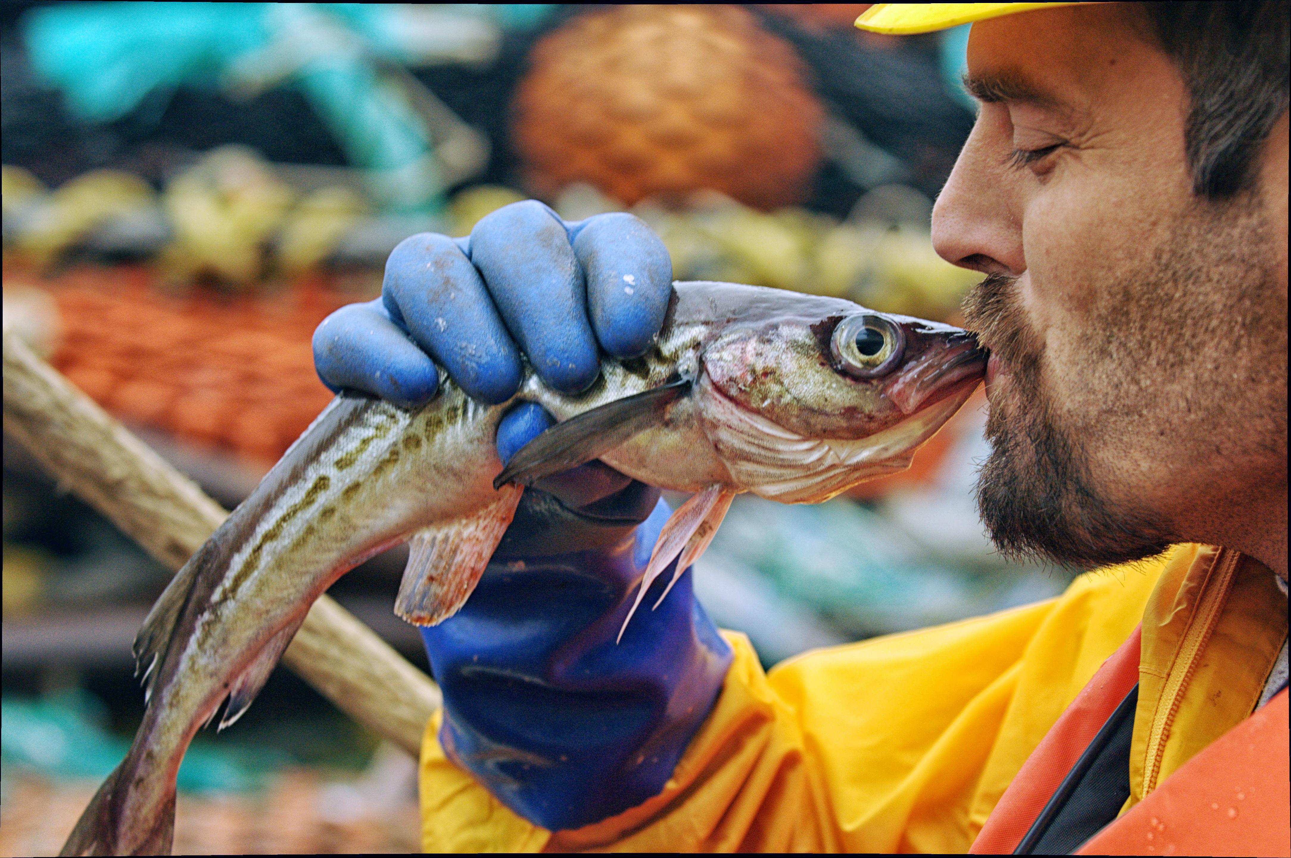 Alaska-Seelachs aus Fanggebiet FAO 67 (Bild: GAPP/Lamont)