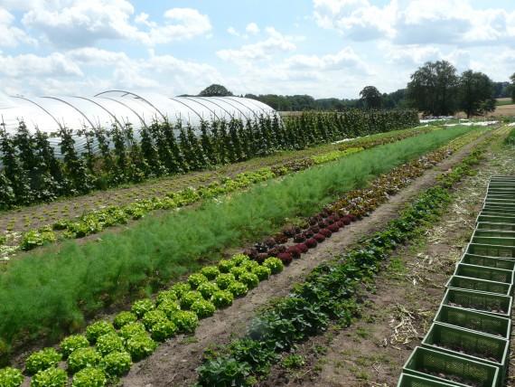 Um die Felder und Gemüsebeete kümmern sich professionelle Landwirte und Gartenbauer im Auftrag der vielen verschiedenen Mitglieder. (Foto: Hof Pente)