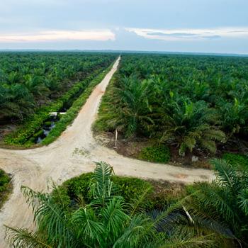 Import und Kennzeichnung von Palmöl
