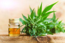 Cannabisöl, CBD