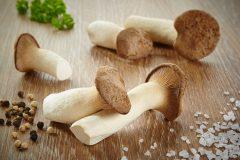 Mit Pilzen gegen Fatique, die grenzenlose Erschöpfung