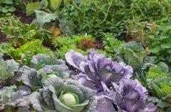 Gemüse ernten: Wann ist die optimale Tageszeit?