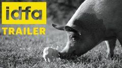 Aus dem Leben eines Hausschweins: der Dokumentarfilm GUNDA
