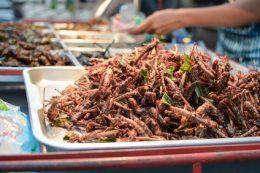 Mehl aus Insekten: Wissenschaftler forschen an Anwendbarkeit