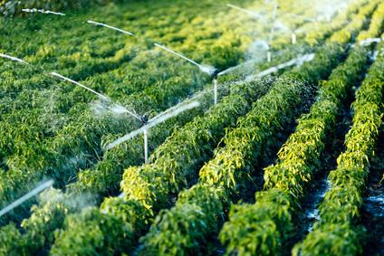 Landwirtschaft (Bewässerung)