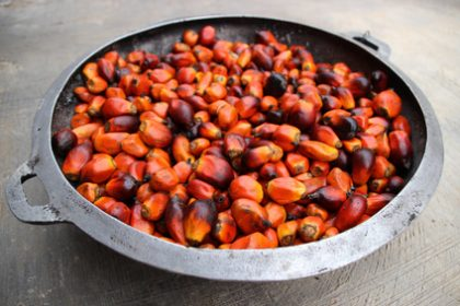 Palmöl, Frucht der Ölpalme