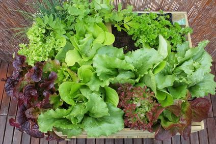 Bayerische Sommerküche : Leichte sommerküche u2013 zeit für regionale salate food monitor