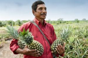 Die erfahrenen SanLucar Anbauer ernten nur optimal gereifte Früchte, die besonders süß und saftig sind.