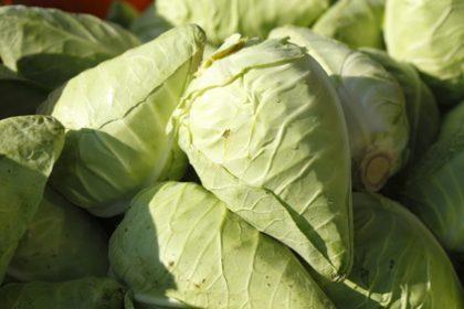 Veggie Sommerküche : Edel und zart: spitzkohl für die leichte sommerküche food monitor