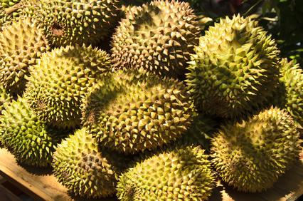 Durianfrucht, Stinkfrucht