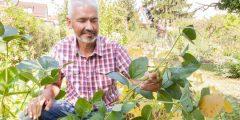 Soja-Anbau in Deutschland: Bienen, Bohnen und Citizen Science