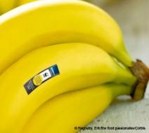 WWF_Banane_460_300_contentgrafik_1spaltig.jpg
