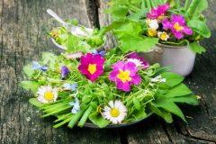 Wildkräuter, essbare Blüten