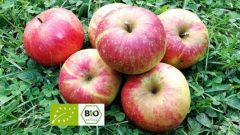 Wie unterscheiden sich Bio-Äpfel von konventionellen Äpfeln?