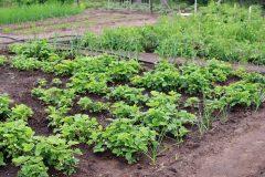 Trend Eigenanbau: Selbst gezogenes Obst und Gemüse stehen hoch im Kurs