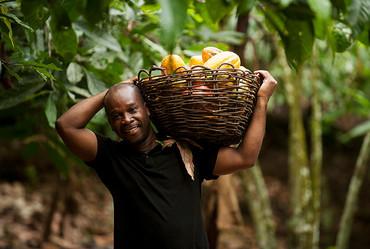 Kakaobauern