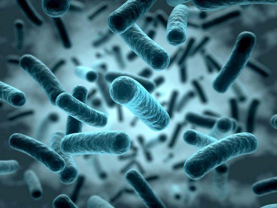 csm_bakterien_fotolia_norman-blue_m_eafc9b8f05