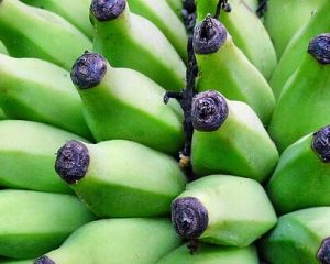 csm_banana-452658_1920_a9954b96ee.jpg