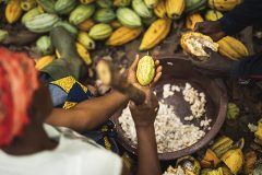 Fairtrade-Kakao legt trotz Pandemie zu