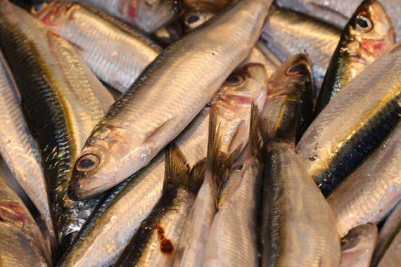 Fisch: Vitamin B12