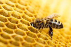 Honigautomat: Honig aus dem Automaten: Flavura Verkaufsautomaten, Warenautomaten, Trommelautomaten