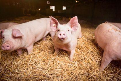 Tierwohlstandards