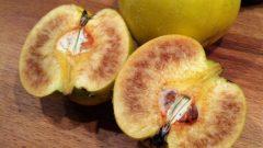 Warum ist das Fruchtfleisch von Quitten manchmal braun?