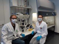Wuppertaler Lebensmittelchemiker*innen erforschen Wirkung von Obst und Gemüse