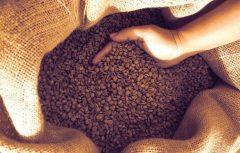 Studie zu brasilianischem Kaffeeanbau: Konventioneller Kaffee gesünder als biologischer