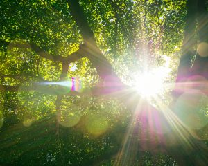Sonne, Natur, Wald