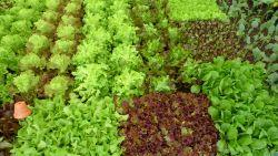 verschiedene-Salate_1.jpg