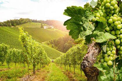Weingut Immobilien: Immobilienmakler REBA IMMOBILIEN AG