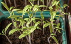Nachhaltiges Gärtnern mit der richtigen Pflanzerde